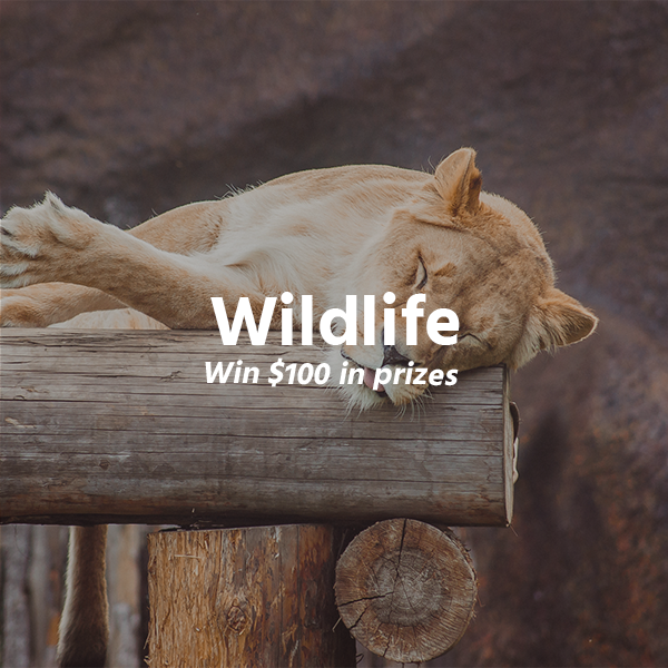 Wildlife - logo