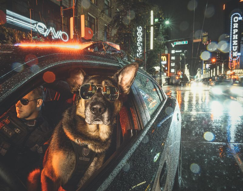 Vancouver Police Department, K9 Calendar 2019. Adam And Kev Photography 2nd Place / Calendar