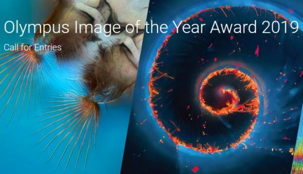Olympus Image of the Year Award 2019