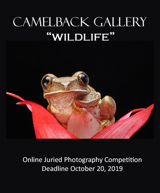 Wildlife Online Juried Photography Competition
