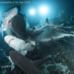 Underwater Photographer of the Year 2020
