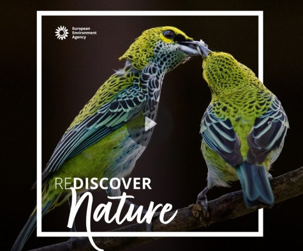 REDISCOVER Nature 2020