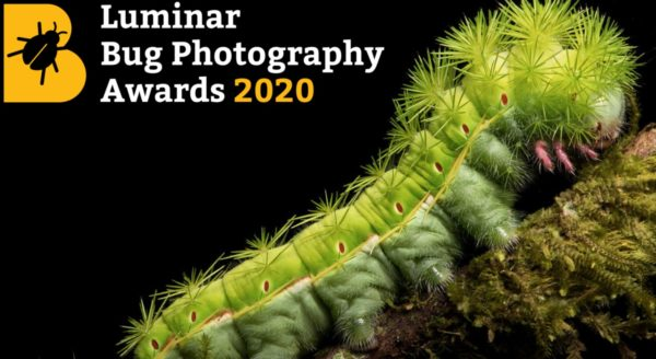 Luminar Bug Photography Awards 2020