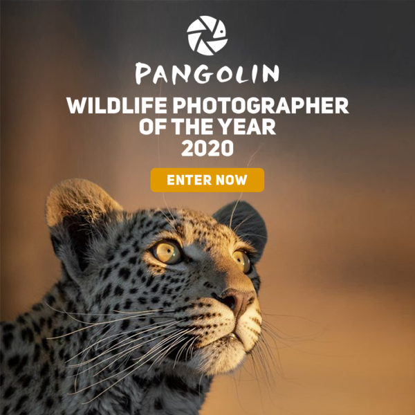 Wildlife Photographer of the Year 2020