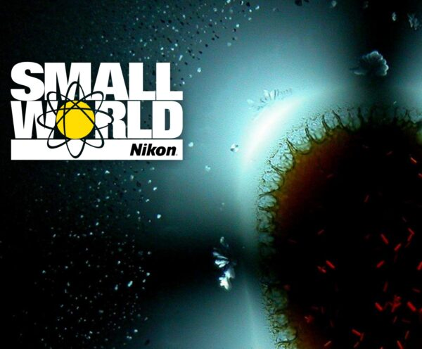 Nikon Small World Competition 2021