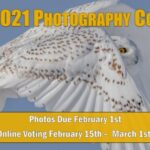 Northwoods Wildlife Center 2021 Photography Contest
