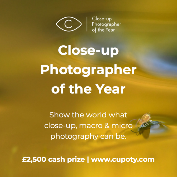 Close-up Photographer of the Year 2021