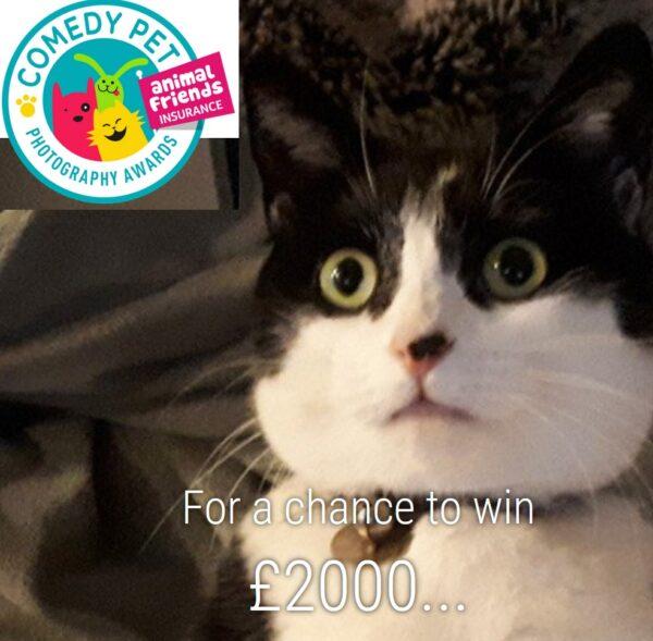 Comedy Pet Photo Awards 2021