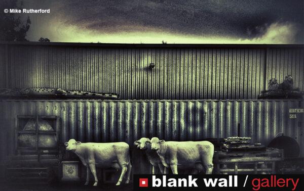 Fine Art by Blank Wall Gallery