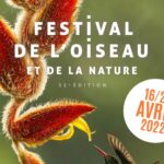 31st International Wildbird Photo Competition