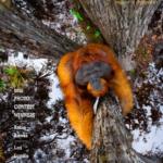Wild Lens Magazine Photographer of the Year 2021